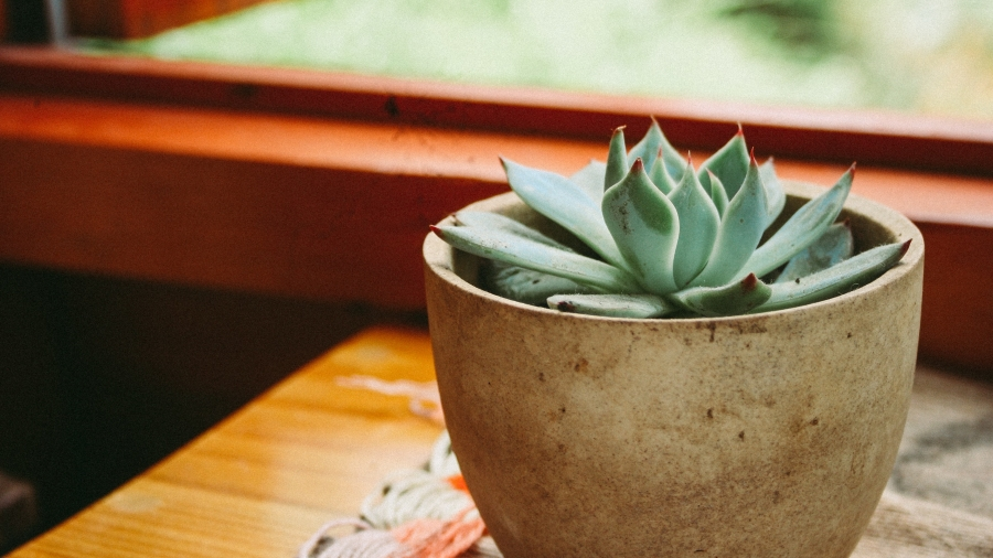 plant-pot-pot-plant-1590077